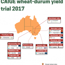 CAIGE yield trials for 2017