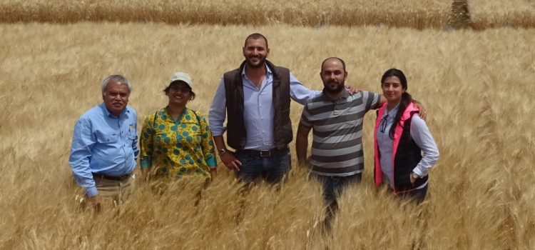 Durum breeder visit to ICARDA