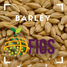 Barley FIGS sets in the AGG