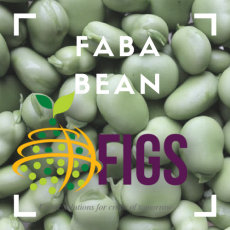 Faba bean FIGS sets in AGG