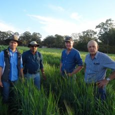 Barley disease data 2013-2018