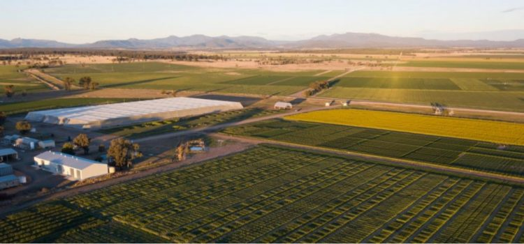 PBI Narrabri Field Day 26 September 2018