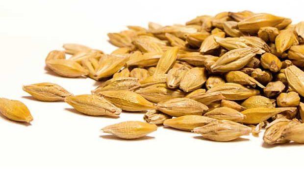 2013-19 Barley Disease data