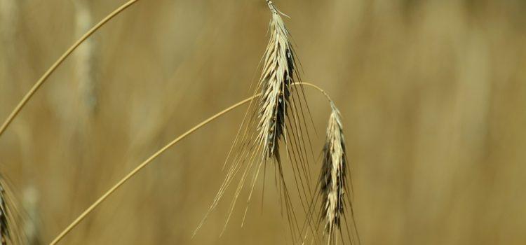 2019 Barley Public data (2018 shipment)