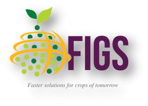 Who supports FIGS?