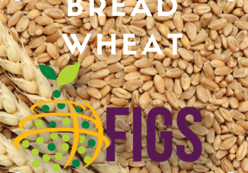 Bread Wheat FIGS sets in the AGG