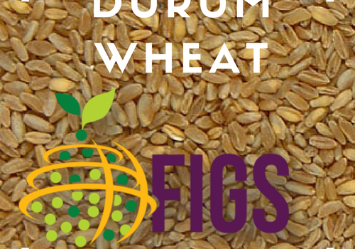 Durum Wheat FIGS sets in the AGG