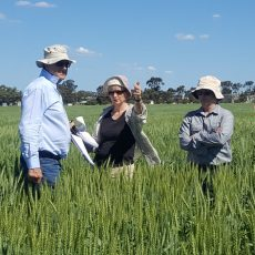 CAIGE WHEAT tour 16-25 October 2018