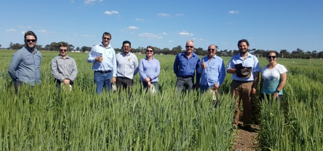 Australia Wheat & Durum tour 2017