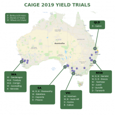 Analysis of 2019 Public Yield trials
